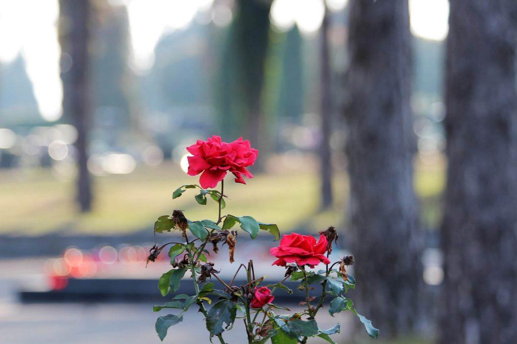 kwiaty na cmentarzu