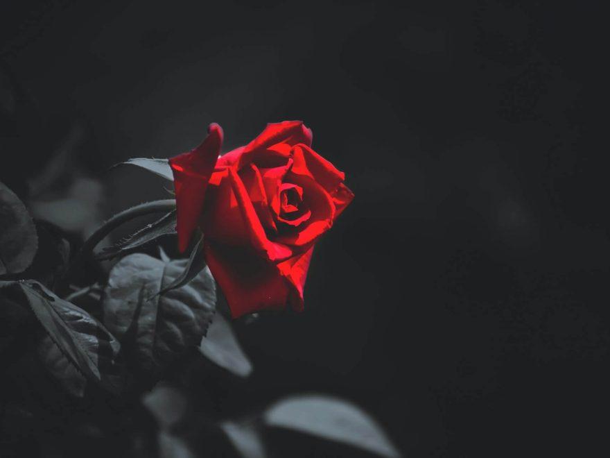 Zakład Pogrzebowy Róża Gdańsk